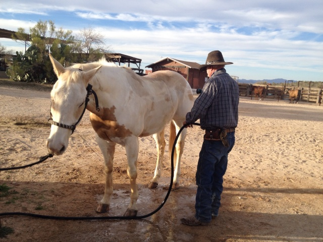 Don washing Baja to rinse away Baja's sweat and salt from his coat, body