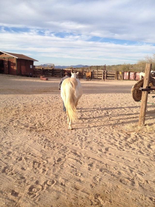 Happy Baja going back to his corral for his feeding time.